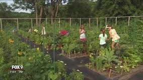 Kids gardening ideas at the Minnesota Landscape Arboretum