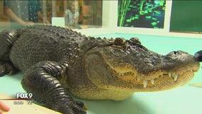 FOX 9 Junior Correspondent Gia Barreiro takes us inside reptile show at Minnesota State Fair
