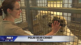 Meet the Como Zoo's polar bears