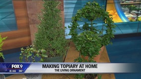 Garden Guy: Holiday plant displays