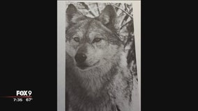 The meaning of the wolf