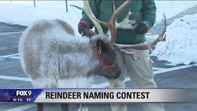 Minnesota Zoo needs help naming reindeer
