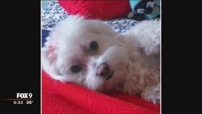 Frightening dog attack in Burnsville takes the life of one pet, injures owner