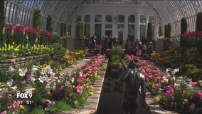 Spring Flower Show at Como Zoo