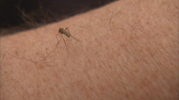 Officials see increase in mosquitoes throughout metro, expect more after rainfall