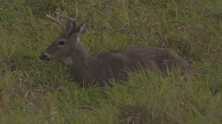 Deer carcasses heads dumped near public trail fox 9 - Rochester home and garden show 2017 ...
