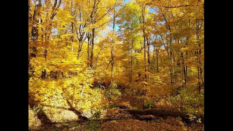 045c2bf8-woods_1476906162416.jpg