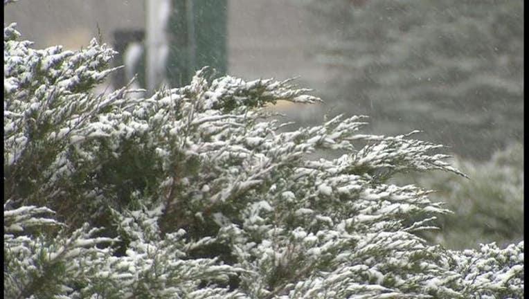 snow on tree_1448576917954.JPG