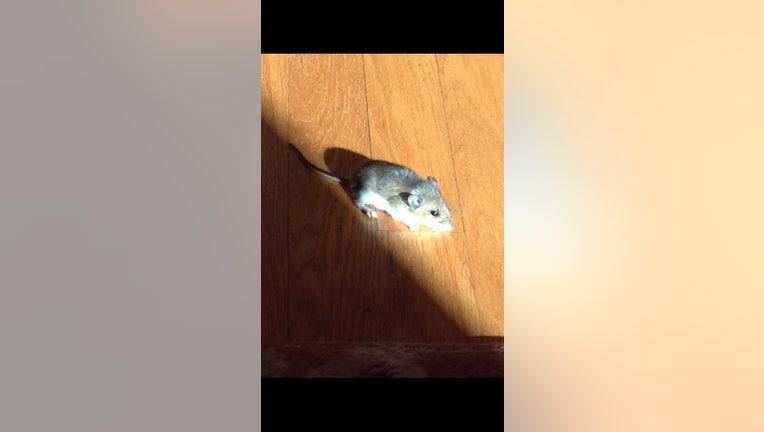 10265a06-Mouse