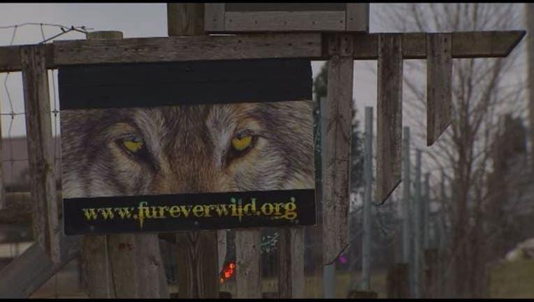 1459c879-Fur-ever wild_1449541971319.JPG