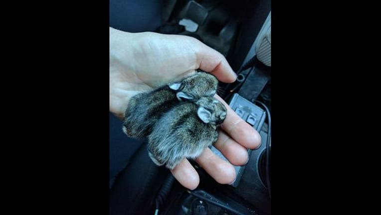 1cfa1c23-bunnies_1492959287723.jpg