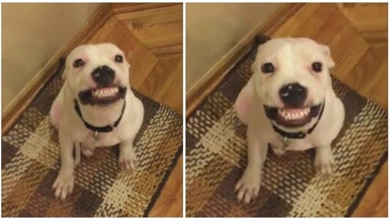 329bbd7f-dog smiles on command_1452610905305-404959.jpg