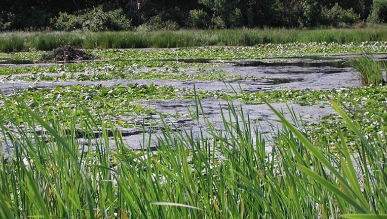 4256a6e3-Wetland