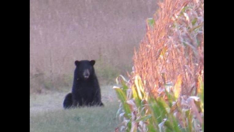 bear_zimmerman_courtney_woodruff1_1495219555806.jpg