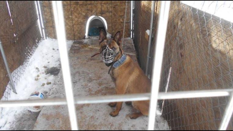 8da3d0c1-Brooklyn Center chained dog