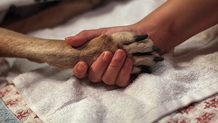 9cb05918-GETTY dog paw_1558533132181.png-402429.jpg