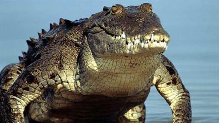 9d2f6080-crocodile_1447208204988-404023.jpg