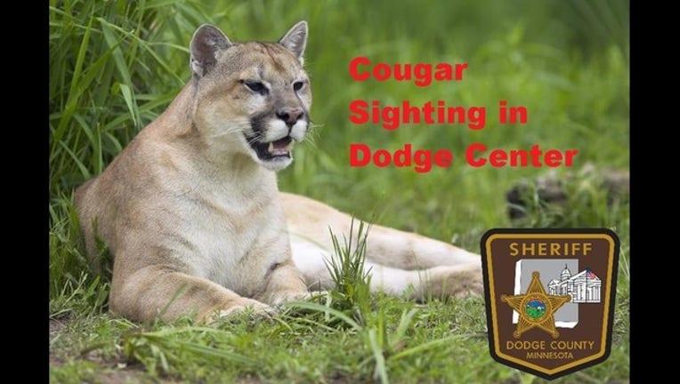cougar dodge county sheriff's office_1559744467868.jpg.jpg