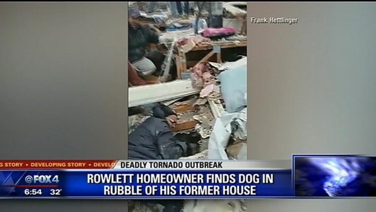af7f005e-dogs found_1451397086724-409650.jpg