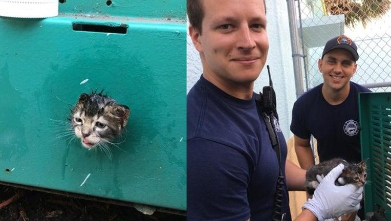 kitten rescue_1534104827223.png-402429.jpg