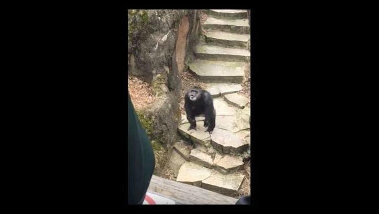 chimp hits grandma with pooh_1491246091623-65880.JPG