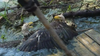 Bald eagle badly hurt in battle in Marine on the St. Croix, Minn. rehabilitated and released to wild