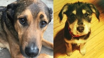 'We miss our dogs': 2 dogs die after St. Louis Park, Minn. doggie daycare leaves them in vehicle