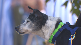 A new way to adopt older dogs