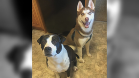 1 dog dead, another missing after car stolen in Minneapolis with pets inside
