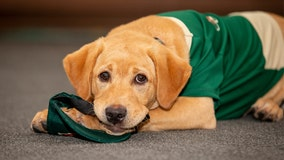 Paw-some: Minnesota Wild adopt rescue dog for upcoming season