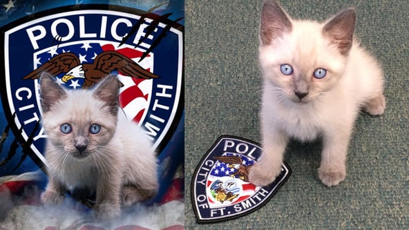 'Pawfficer' reporting for duty: Adorable kitten joins ranks at Arkansas police department