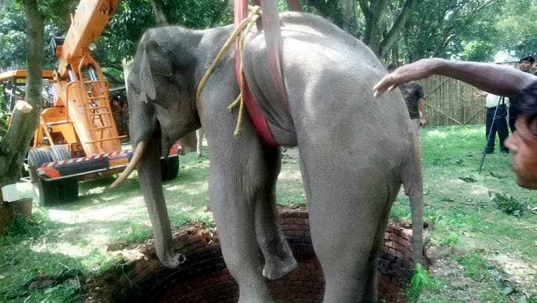 This is the heartwarming moment an elephant is saved from the bottom of a 20-foot well by rescuers using a crane. Upon being lifted out of the well, the elephant was kept under close supervision for a few days, then released into the wild