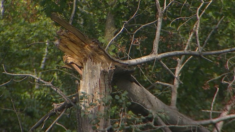 9V TREE FALLS & KILLS TEEN _00.00.23.01_1566146803968.png.jpg