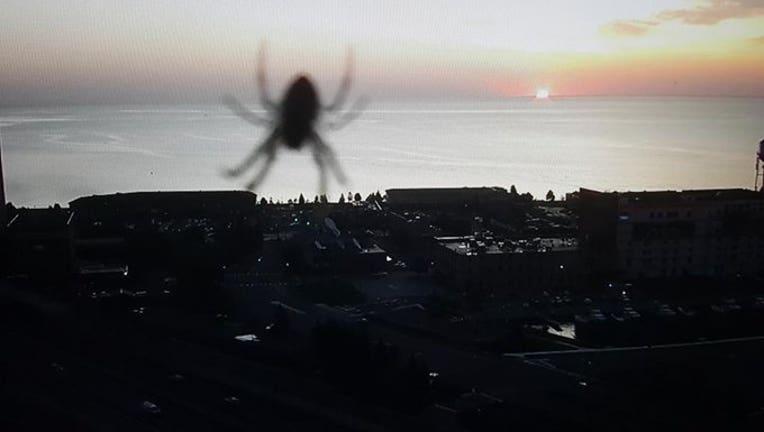 Spider on MnDOT camera