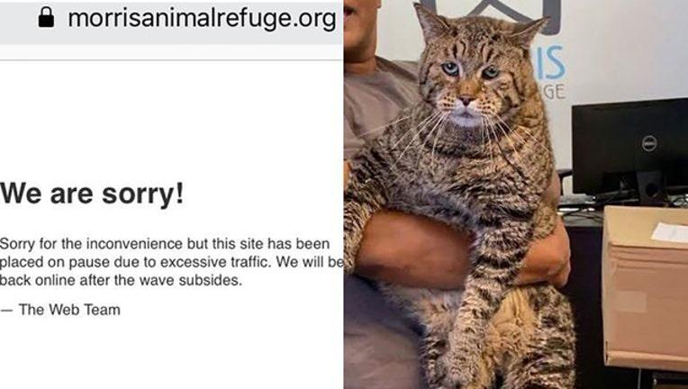 animal-shelter-cat_1566570627254-401385.jpg