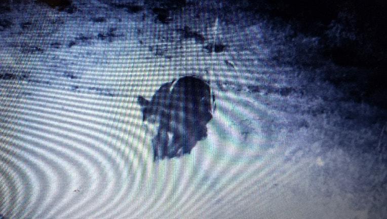 bear sighting_Josh Walstrom_1566850362738.jpg.jpg