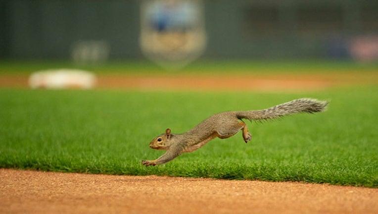 getty twins squirrel tuesday_1566394095839.jpg.jpg