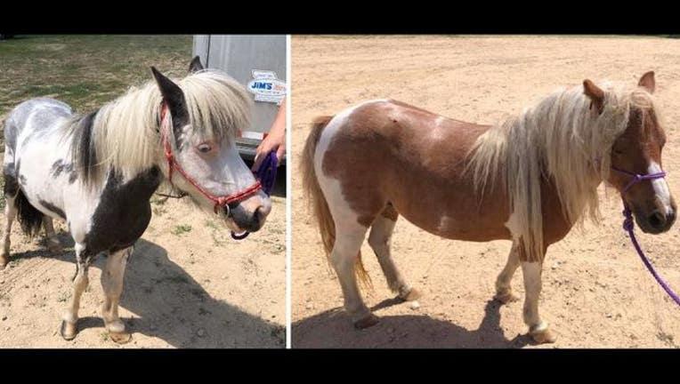 7bafc8a3-ponies_1564942087659.JPG