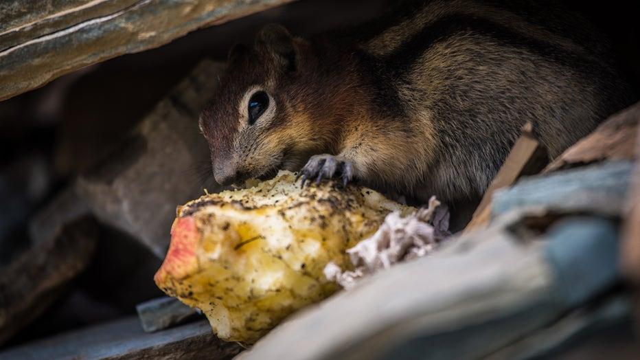 Food-waste-national-park.jpg