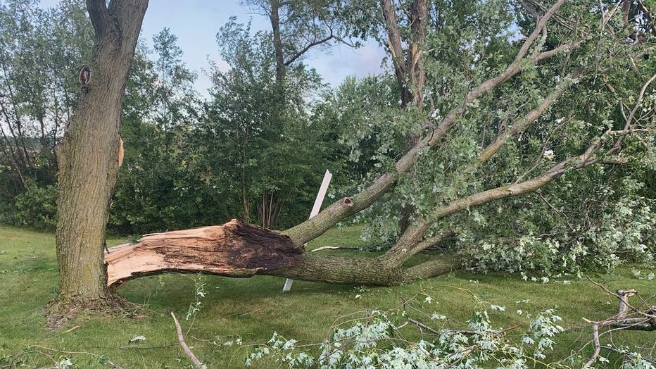 tree damage Minnestrista