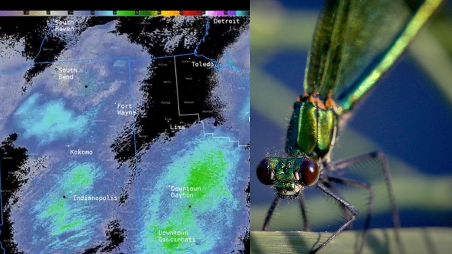 Radar-and-dragonfly-pic.jpg