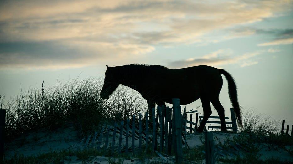 Wild-horses-GETTY.jpg