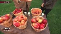 It's apple cider season at 'The Landing' in Shakopee, Minnesota
