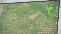 Fresh Acres carves Vikings and Packers helmets into corn maze