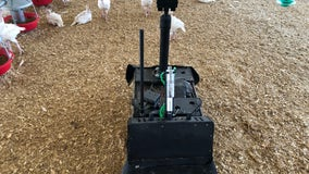 Poultry Patrol: Robot at family turkey farm keeps an eye on the flock