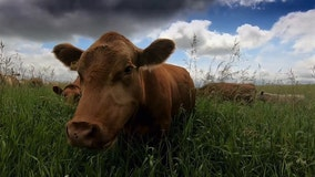 Another way: Desperation led farmer 'back to nature'
