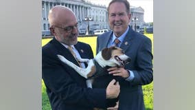 House passes bill to make animal cruelty a federal felony in 'major step to end animal abuse'