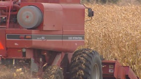 Chains wrapped around cornstalks damage combine near Hutchinson, Minnesota