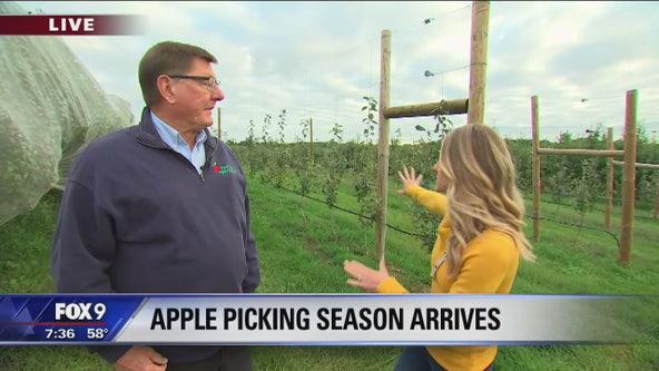 Apple season is fast approaching