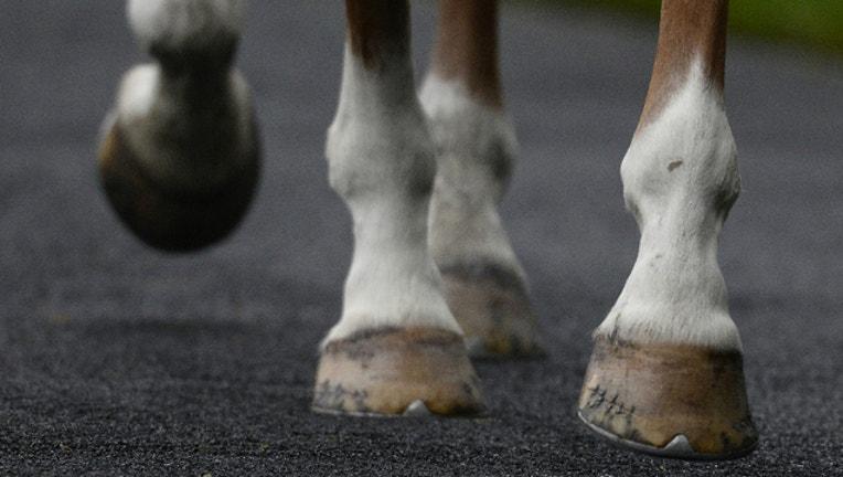 762bc388-GETTY_horse hooves_1525381070285.jpg.jpg